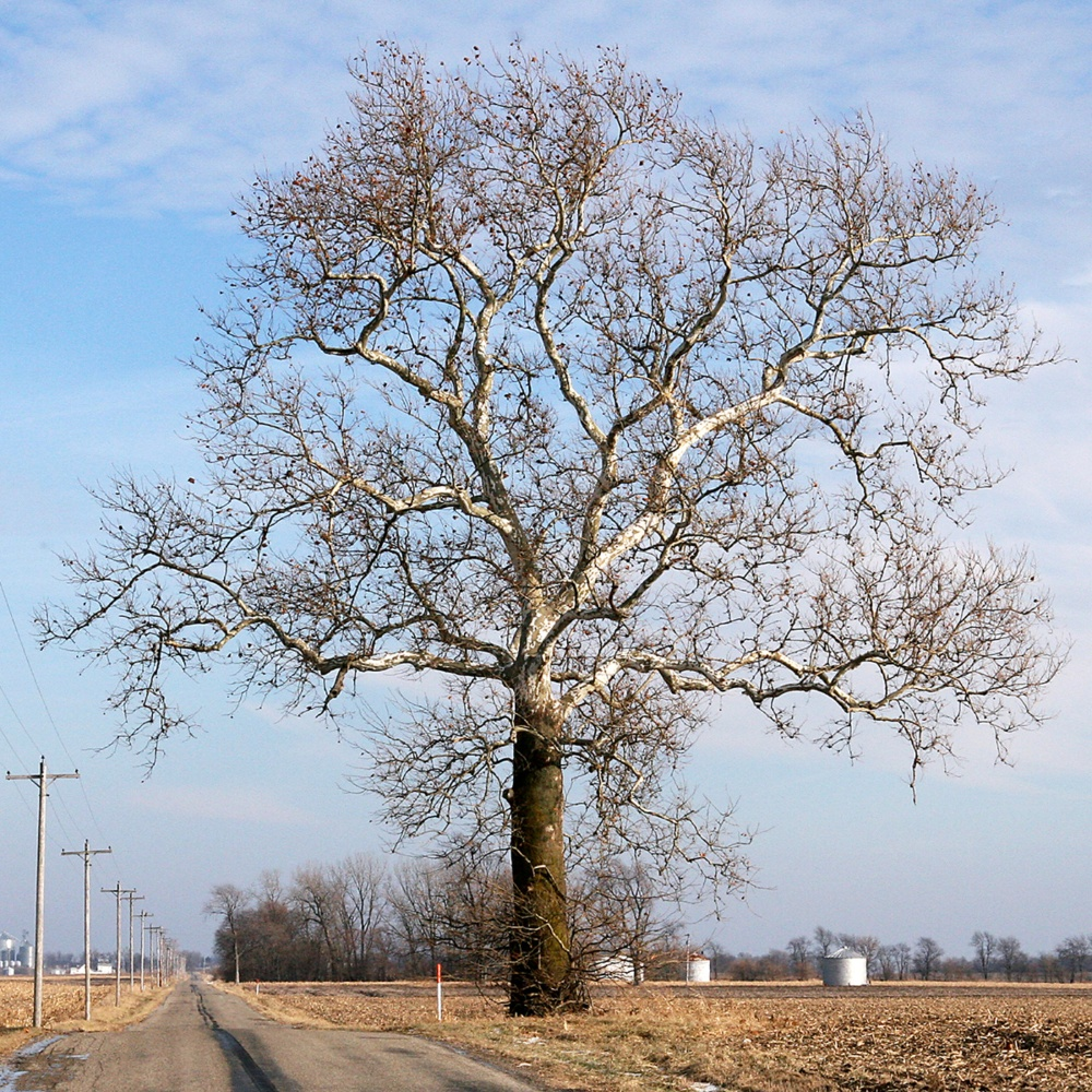 Photograph provided by www.ebben.nl/en/treeebb/